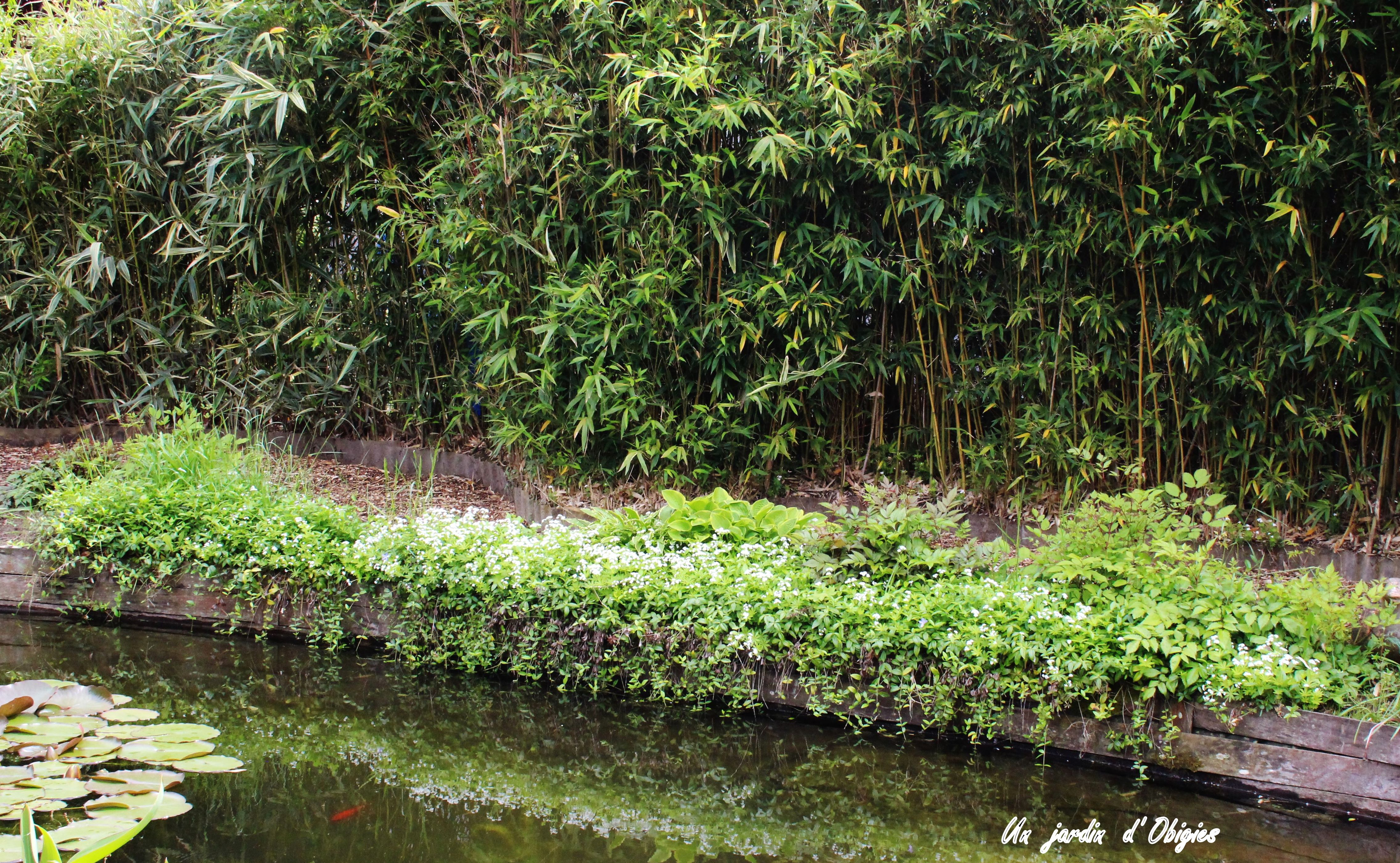 Bordure d' aspérule odorante - galium odoratum au jardin d' Obigies