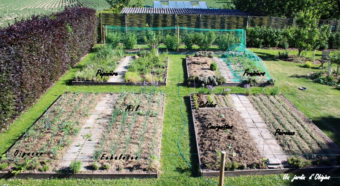 Potager d' un jardin d' Obigies ( B. - 26/5/2017 )