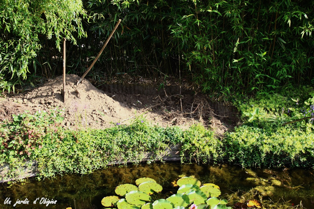 Bambous traçants au bord de la mare d' un jardin d' Obigies