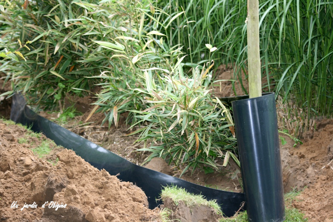 Cerclage des bambous au Jardin d'Obigies