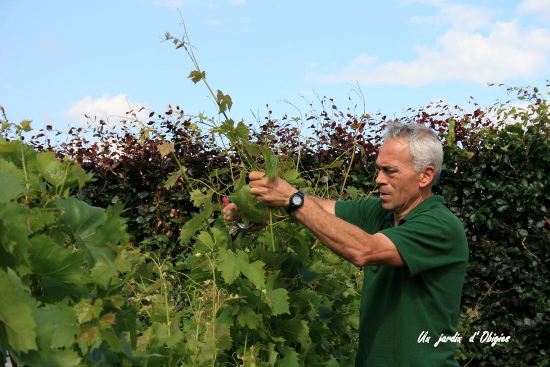 Taille en vert de la vigne à Obigies